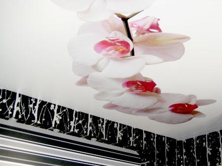 Купить виниловые наклейки на потолок москва